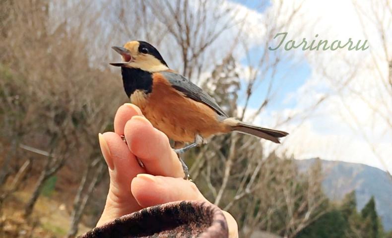 人懐っこい野鳥